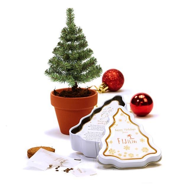 Kweekset 'Christmas tree to be' in blik