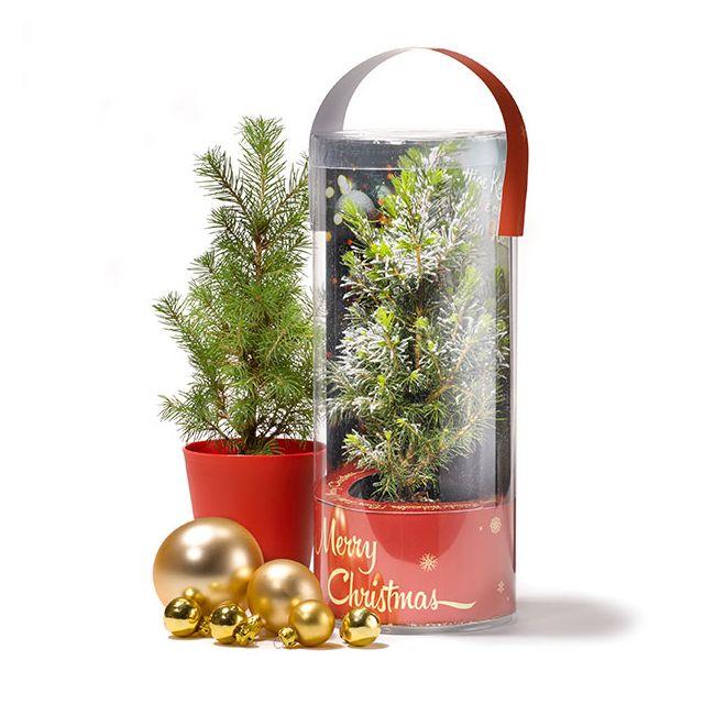 Kerstboom in eigen ontwerp koker