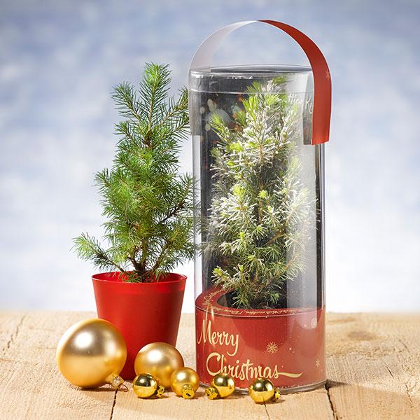 kerstboom weggeven