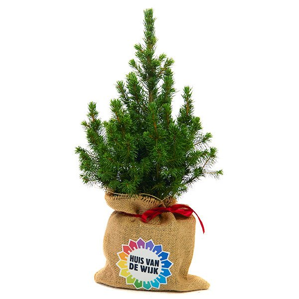Kerstboom in jute zak