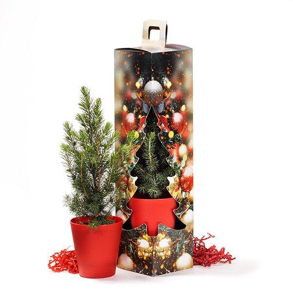 Kerstboom in geschenkdoos